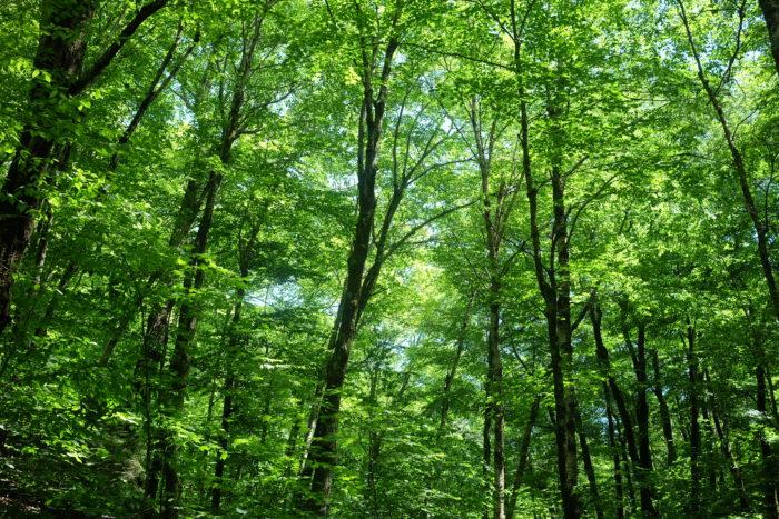 décrocher forêt arbres randonnée